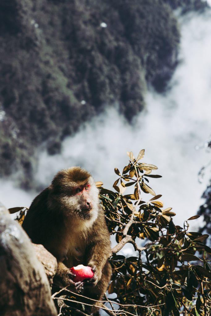 Mount Emei, Emeishan, Sichuan